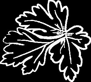 Locura 3 kräuter 1